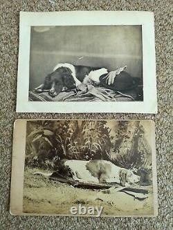 Post mortem dog dead photographs Victorian PAIR original