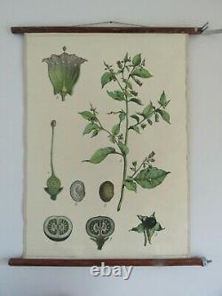 Vintage BELLADONNA school chart BOTANICAL wall hanging DEADLY NIGHTSHADE flower